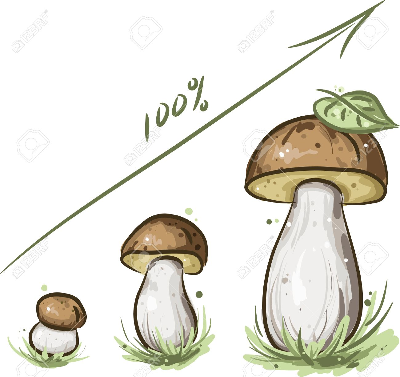 diagram of growth of mushroom stock vector - 5881288