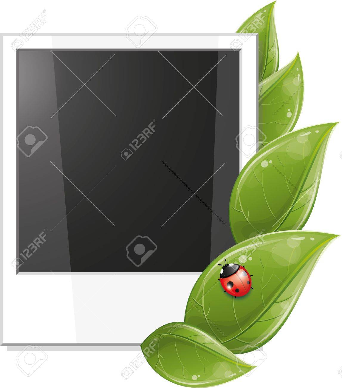 Blank photo frame with green leaves and ladybug, vector illustration, eps-10 Stock Vector - 9362463