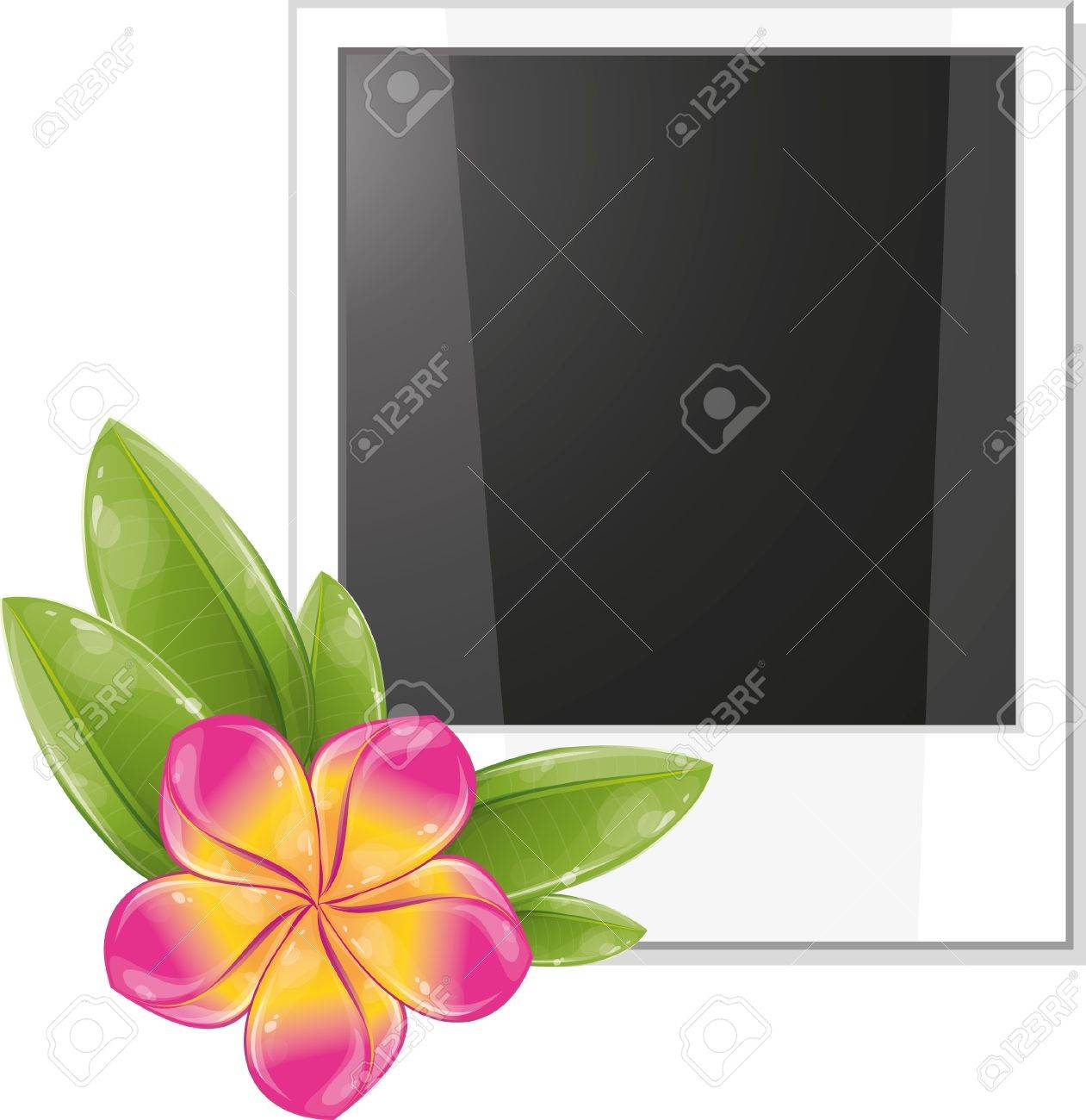 Blank photo frame with pink frangipani flower, vector illustration, eps-10 Stock Vector - 9362474