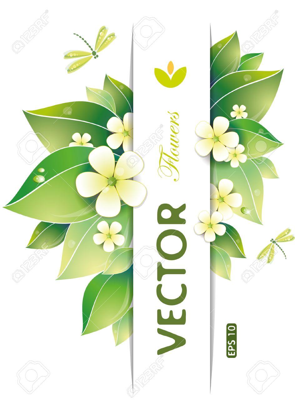 Green leaves and jasmin flowers, vector illustration, eps-10 Stock Vector - 10551891