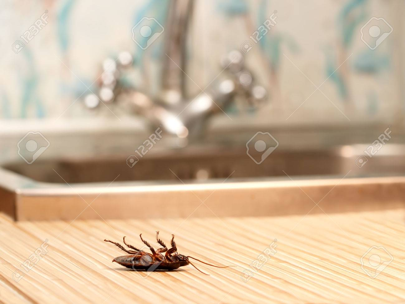 Dead cockroaches in an apartment house on the background of the water faucet. Inside high-rise buildings. Fight with cockroaches in the apartment. Extermination. Standard-Bild - 56169539