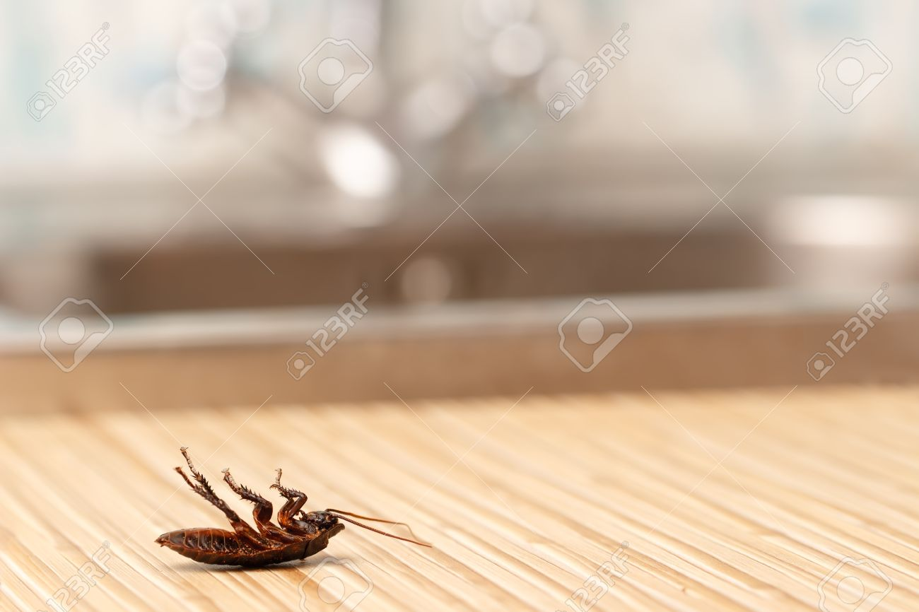 Dead cockroaches in an apartment house on the background of the water faucet. Inside high-rise buildings. Fight with cockroaches in the apartment. Extermination. Standard-Bild - 56169541