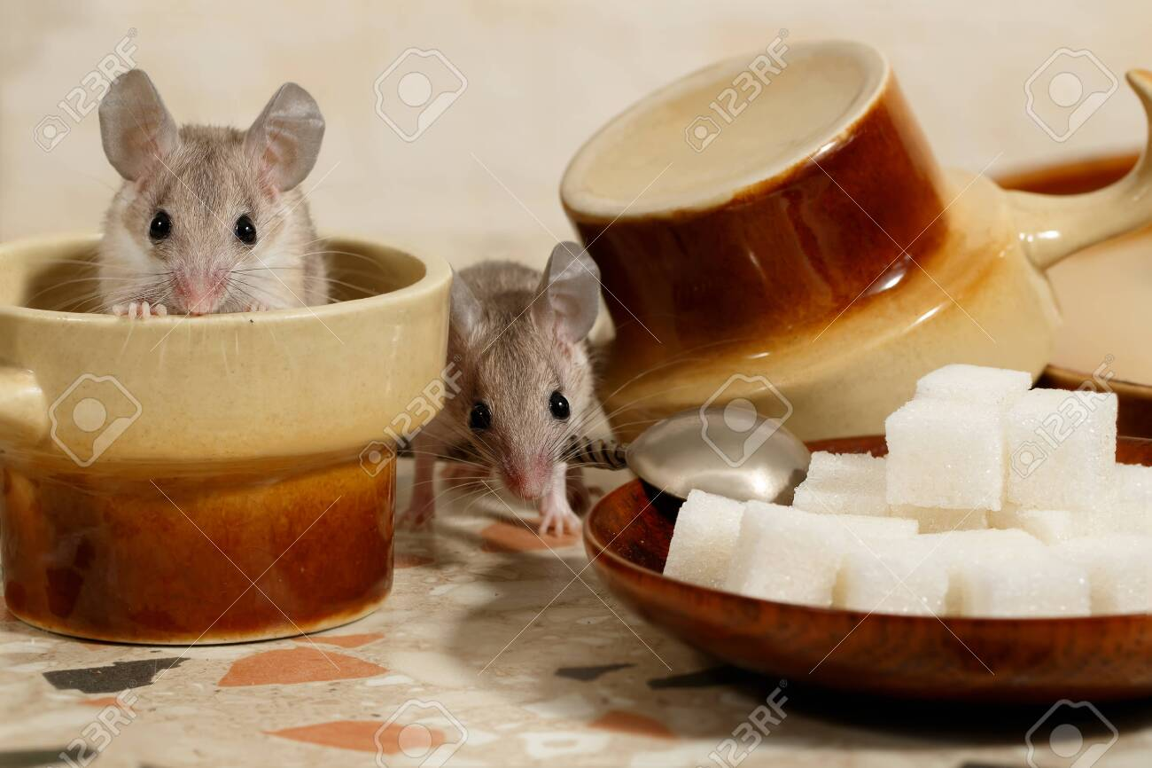 Close-up of two cups on the kitchen table. One mouse sits in..