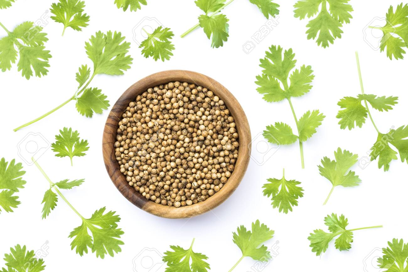 Coriander seeds and leaves on white background - 130114957