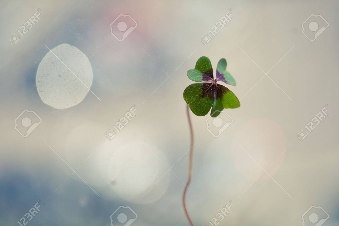 Four - Leaved Clover, green - 8605642