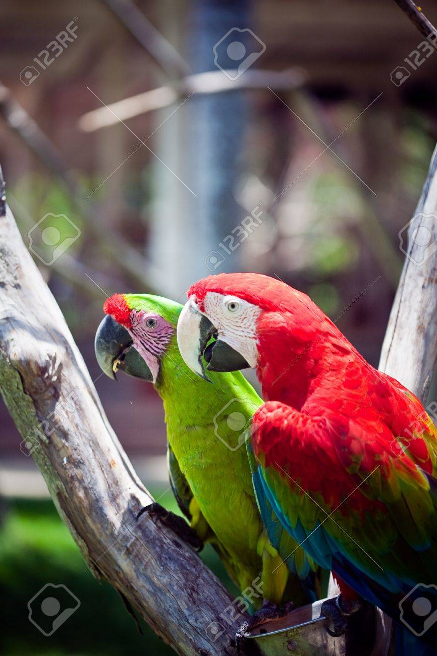 macaw  parrot sitting on branch Stock Photo - 17267383