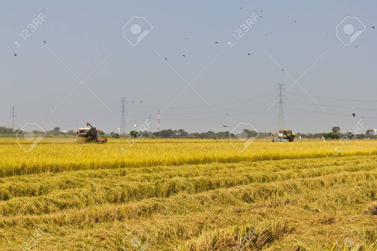 Rice harvesting with combine harvester, Thailand Stock Photo - 12552074