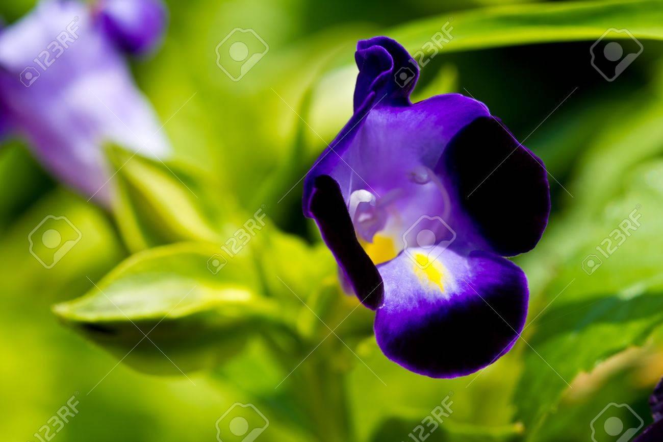 Increíble Las Uñas De Color Púrpura Oscuro Festooning - Ideas de ...