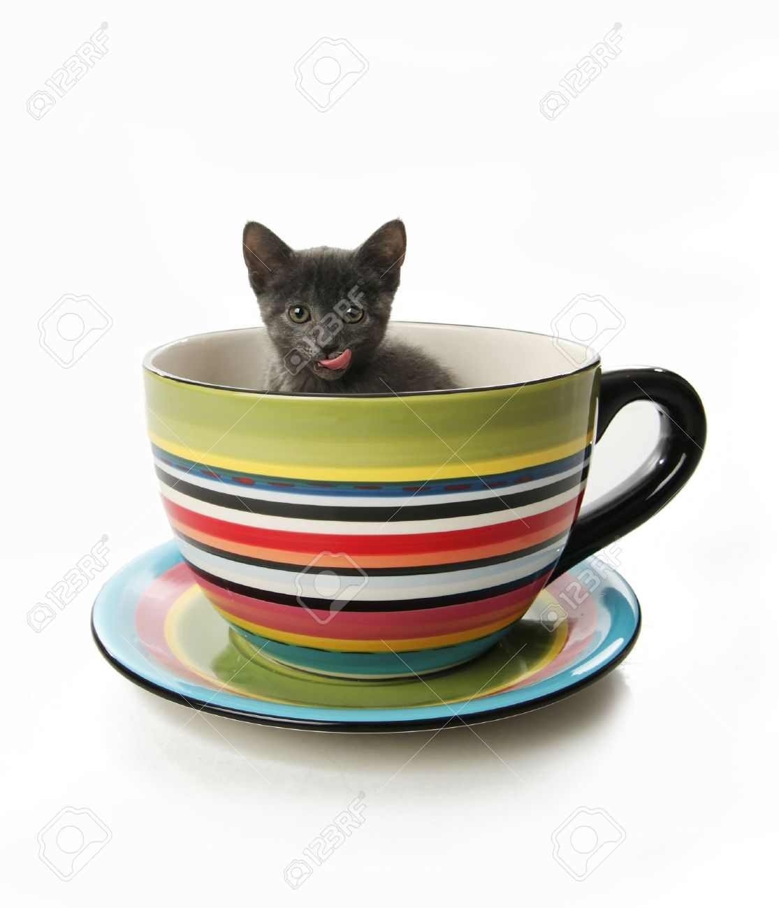 Small gray kitten in a large tea cup or mug - 8046099
