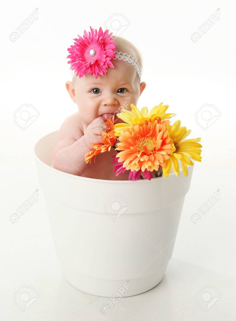 flower headband images u0026 stock pictures royalty free flower