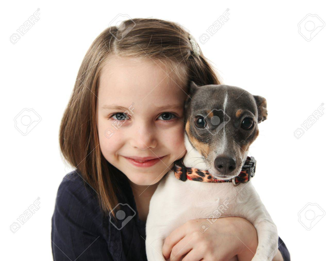 Portrait of a beautiful young girl snuggling with a cute terrier puppy dog, isolated on white in studio - 8809336