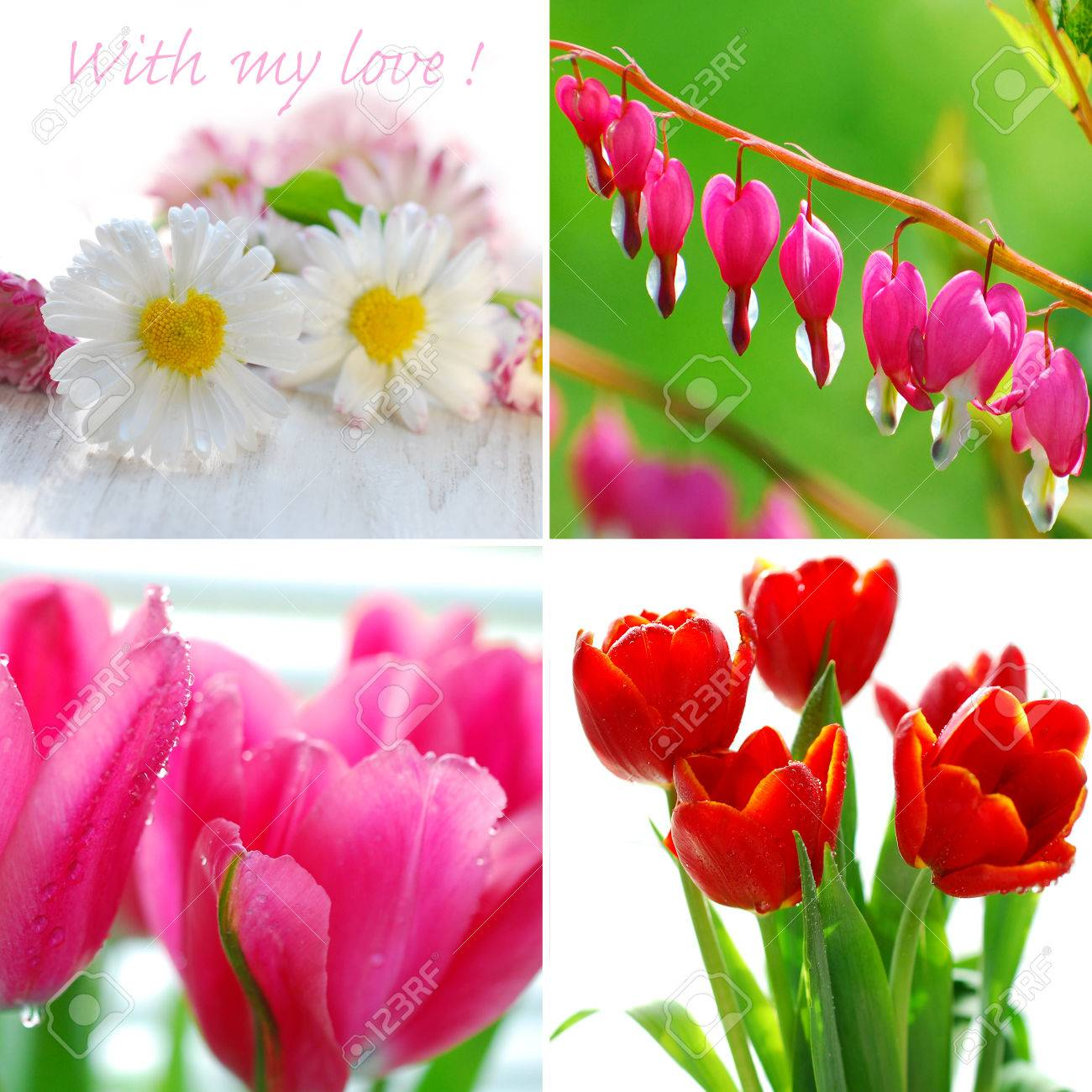Beautiful valentine s collage with flowers as symbol of love stock beautiful valentine s collage with flowers as symbol of love stock photo 25338441 izmirmasajfo