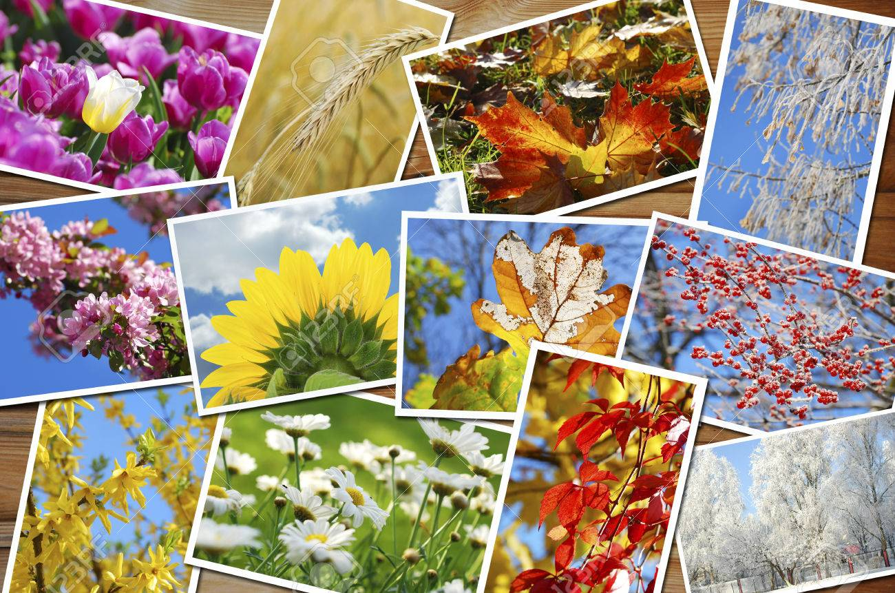 beautiful collection of many images with four seasons of the year on wooden - 32880690