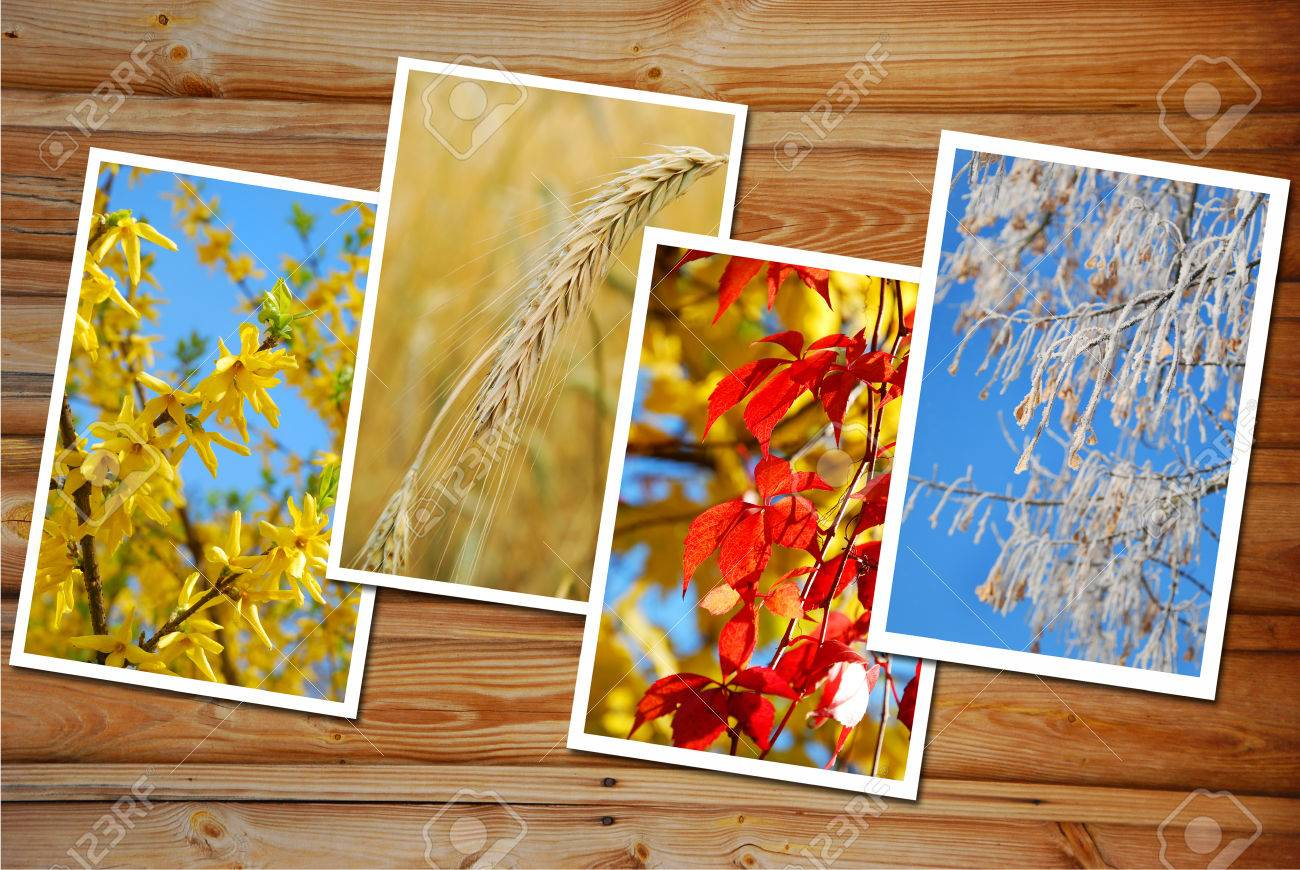 beautiful collection of images with four seasons of the year on wooden - 32880670