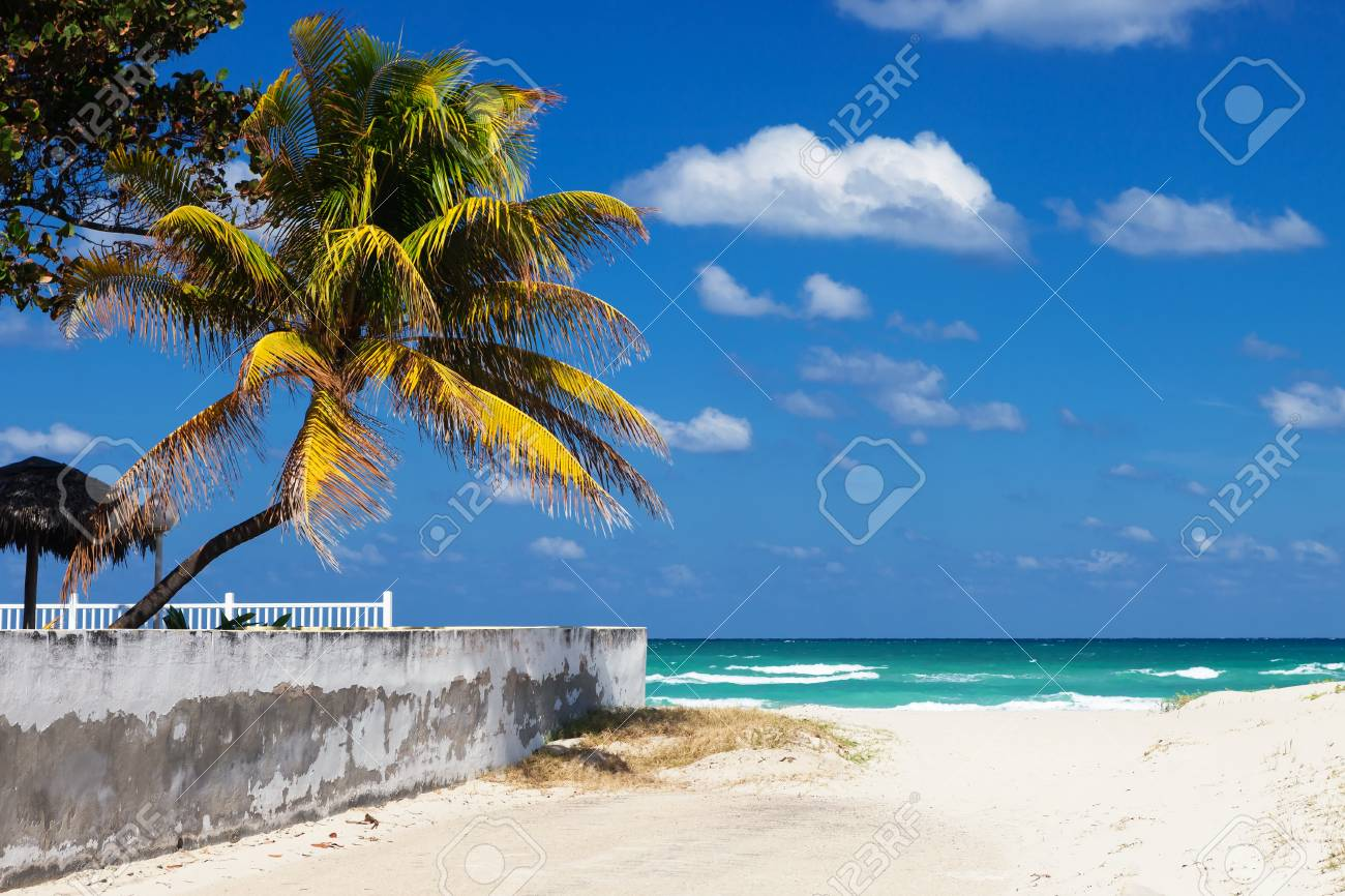 Coconut palms on the beach on a sunny day Stock Photo - 16941963