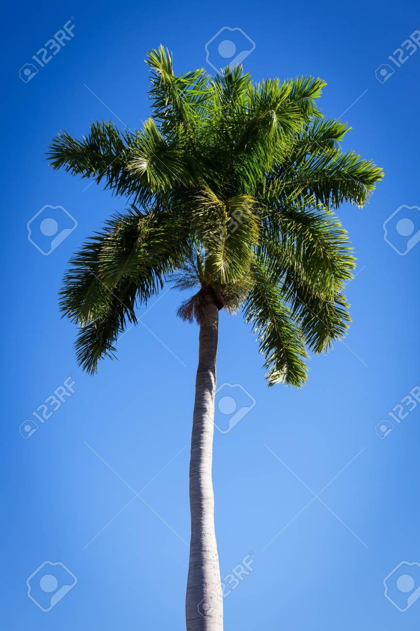 beautiful palm tree against a blue sky Stock Photo - 16954258