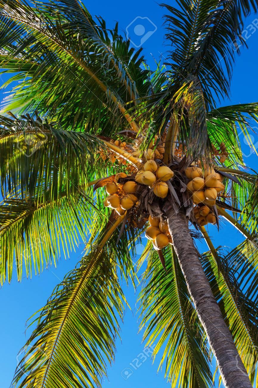 beautiful palm tree against a blue sky Stock Photo - 17605079