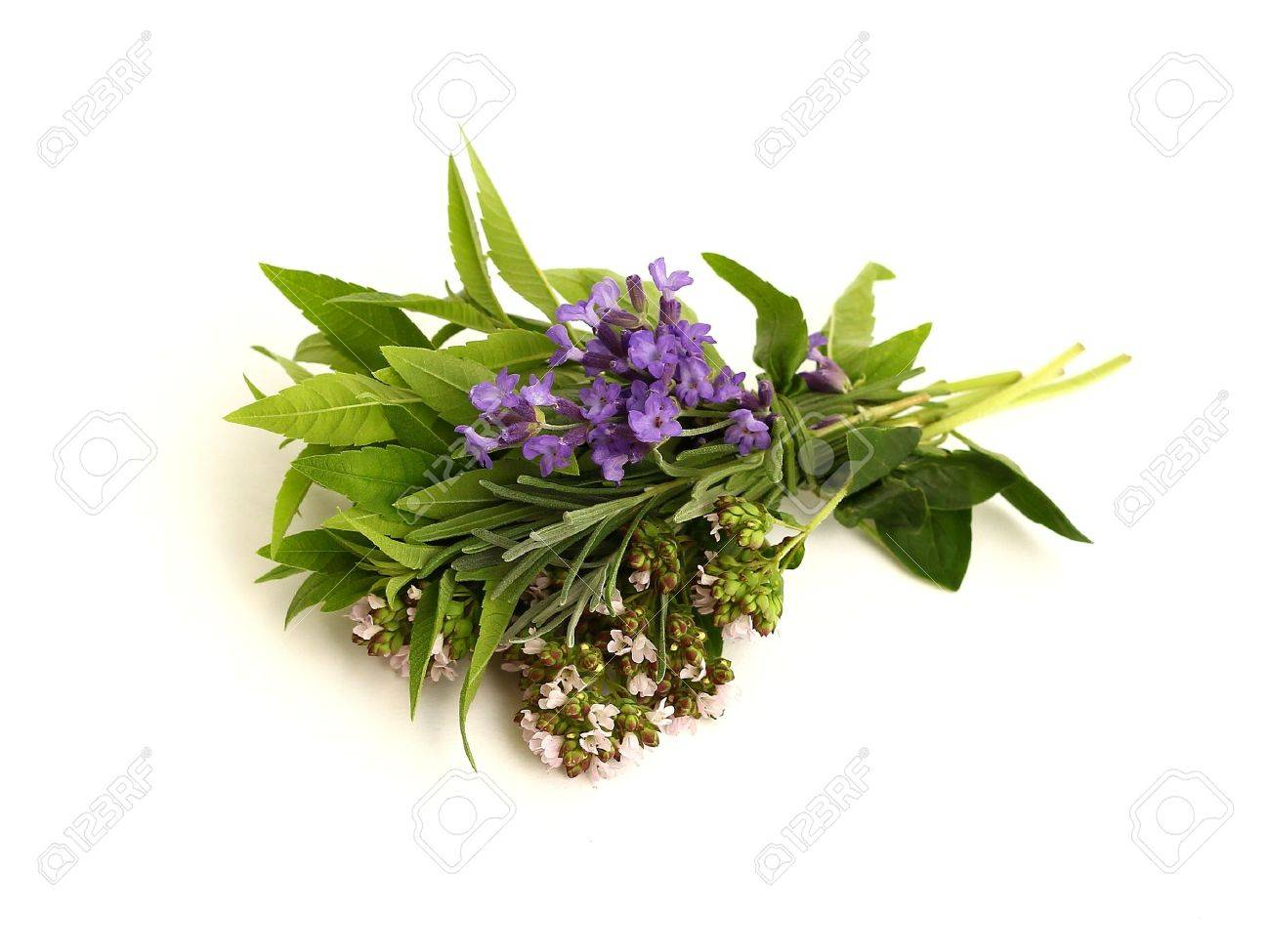 herbs Stock Photo - 9894606