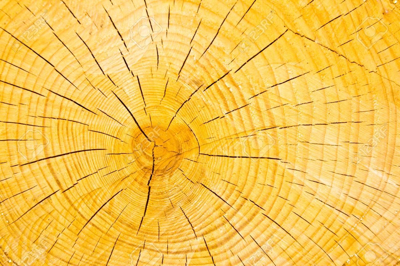 wooden cut texture Stock Photo - 13797598