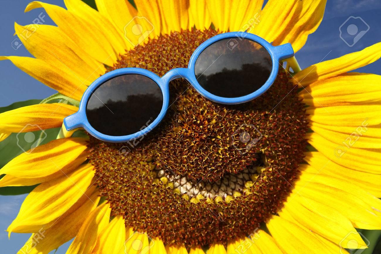 Smiling sunflower - 32926382