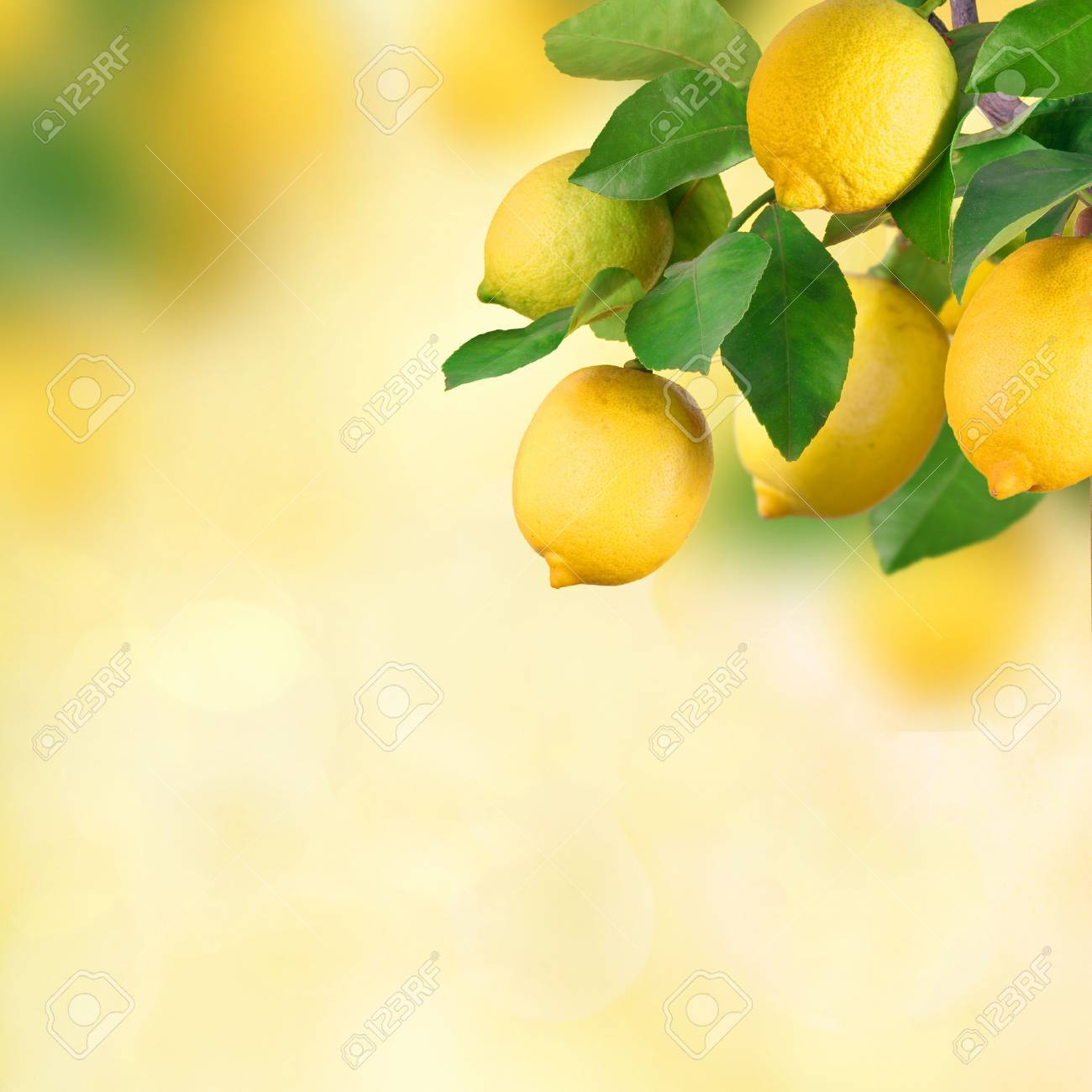 Lemon bunch with space for text - 36568413