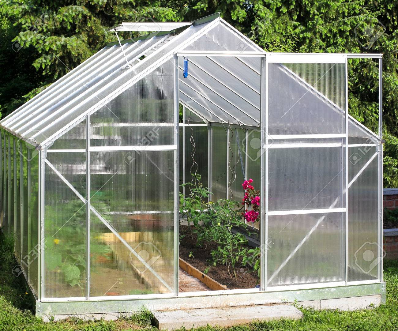 Greenhouse with tomato plants - 40193036
