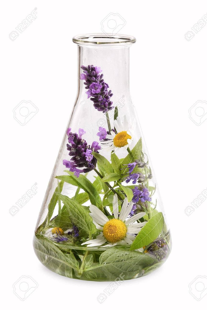 Erlenmeyer flask with fresh herbs Medical - 44338398