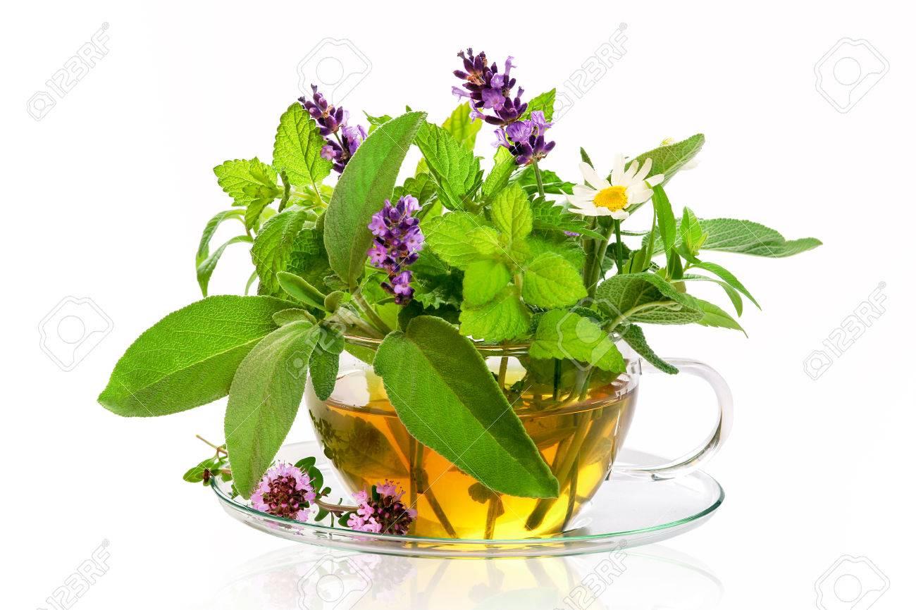 Teacup with fresh healing herbs - 61507209