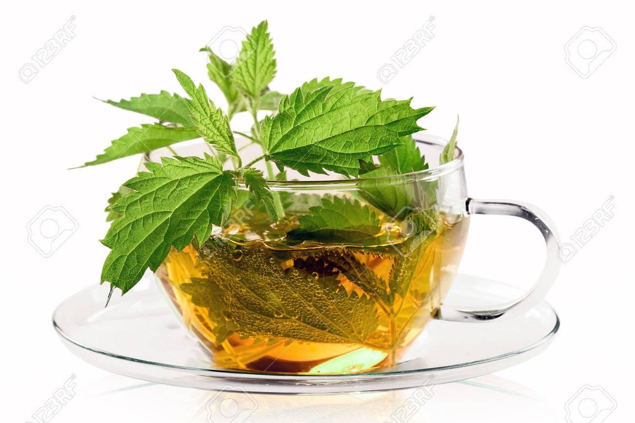 Fresh stinging nettle tea - 61505881