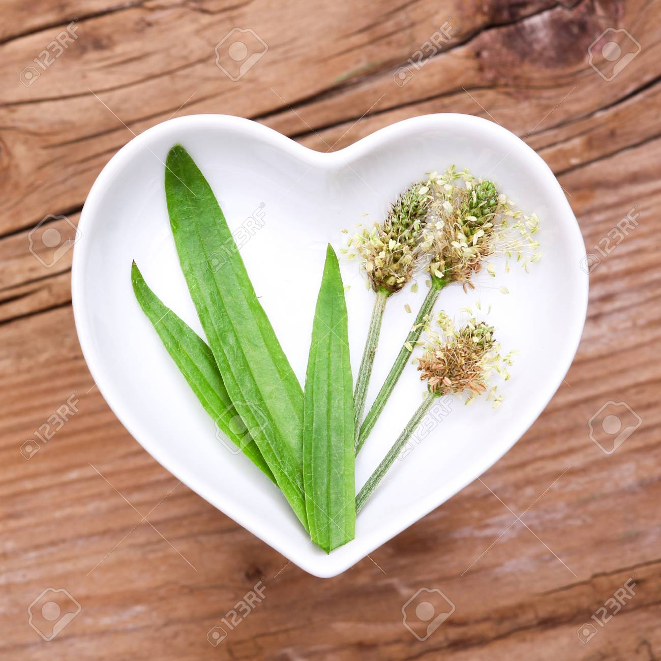 Homeopathy and cooking with ribwort plantain - 61826778