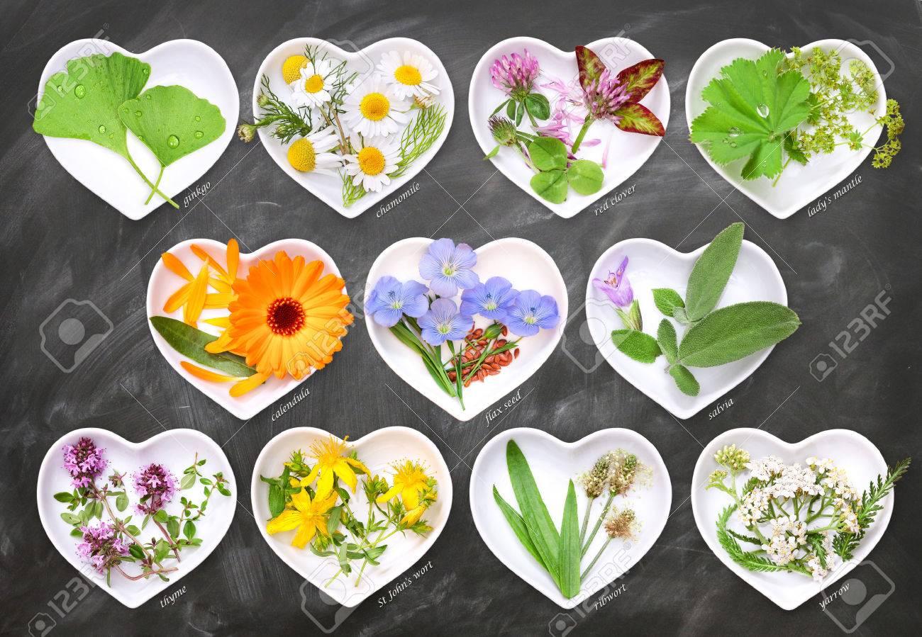 Alternative Medicine with medicinal plants 1 - 62239583
