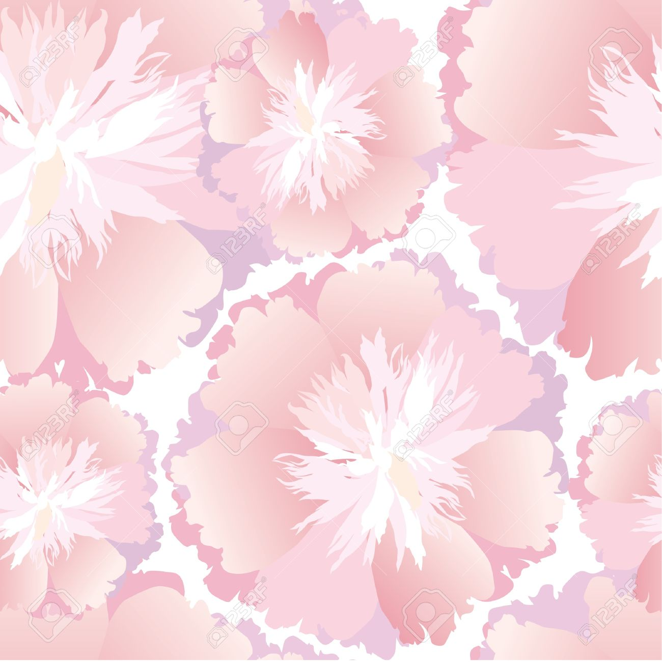 Pink floral seamless vector background floral hrysanthemum seamless - Floral Seamless Pattern White And Pink Flower Background Stock Vector 16139988