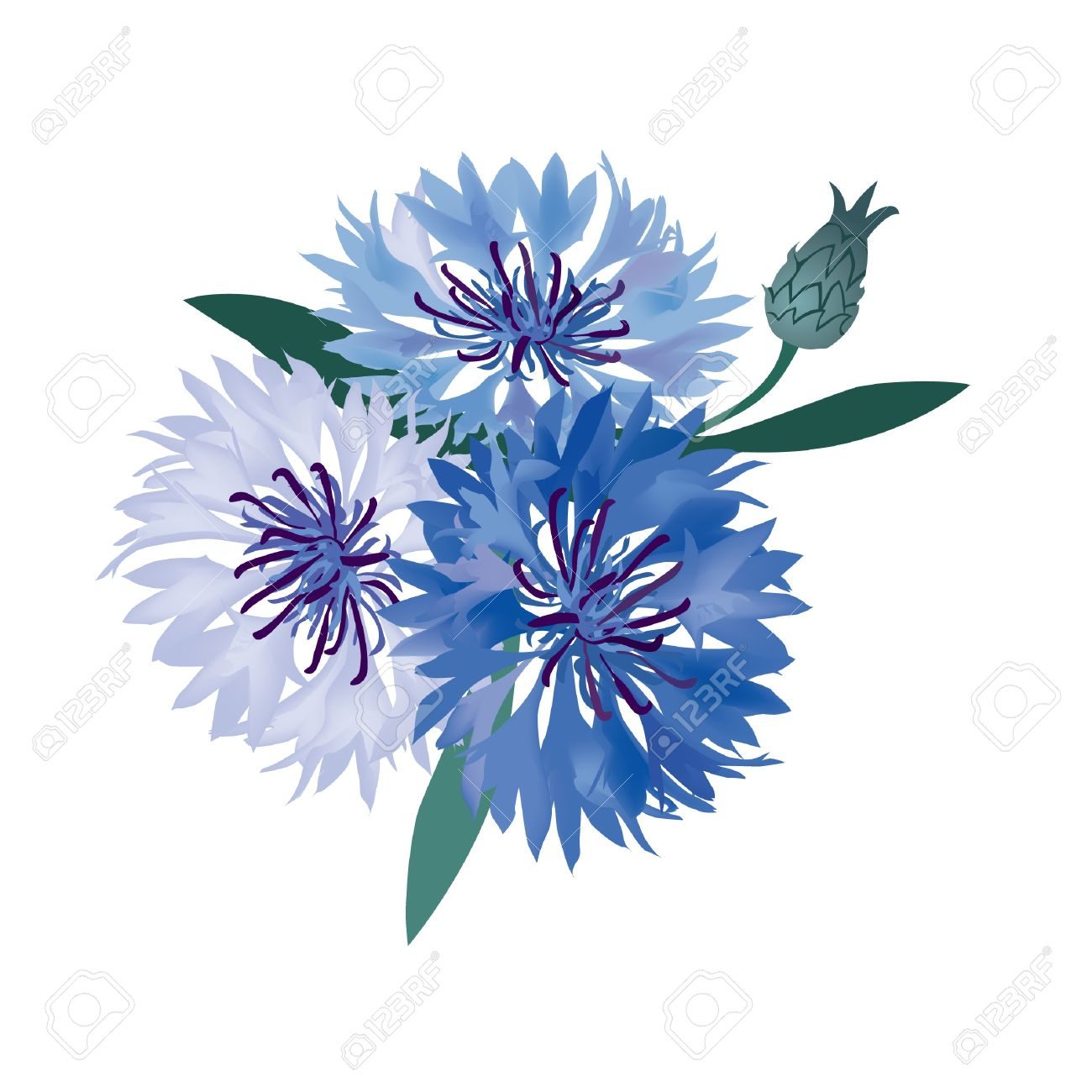 flower bouquet  vector illustration blue cornflower Stock Vector - 16875611