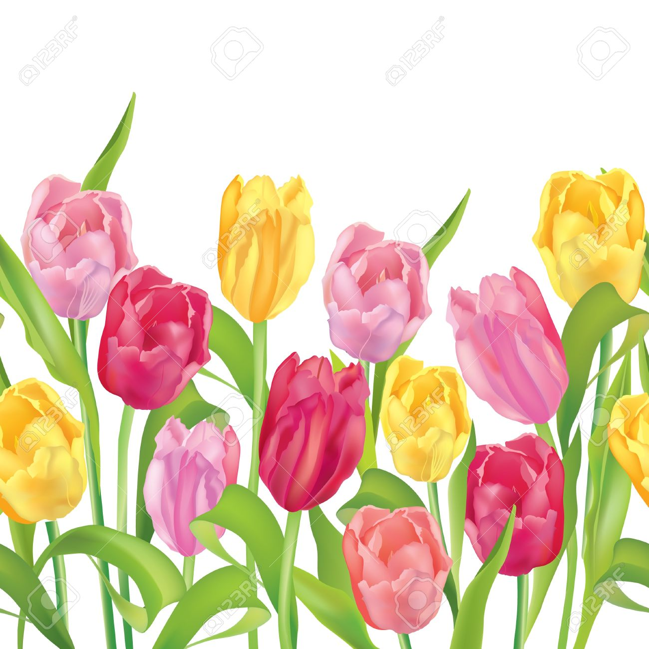 Flower border seamless  Tulips flower garland on white background  Flower bouquet  Tulips bouquet isolated Stock Vector - 18050492