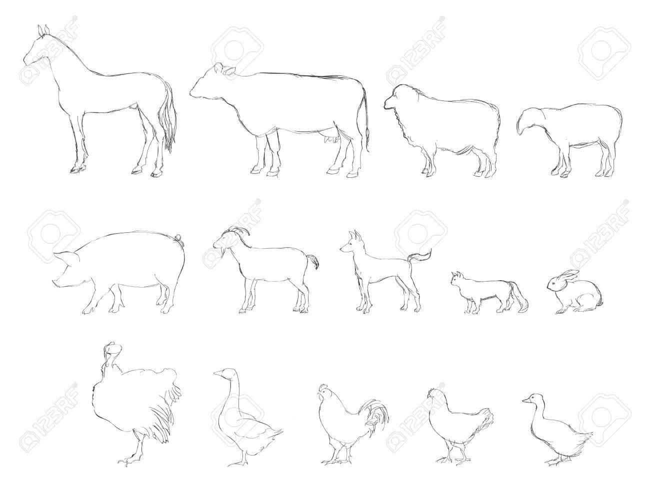 Farm animals sketch set Stock Vector - 20441752
