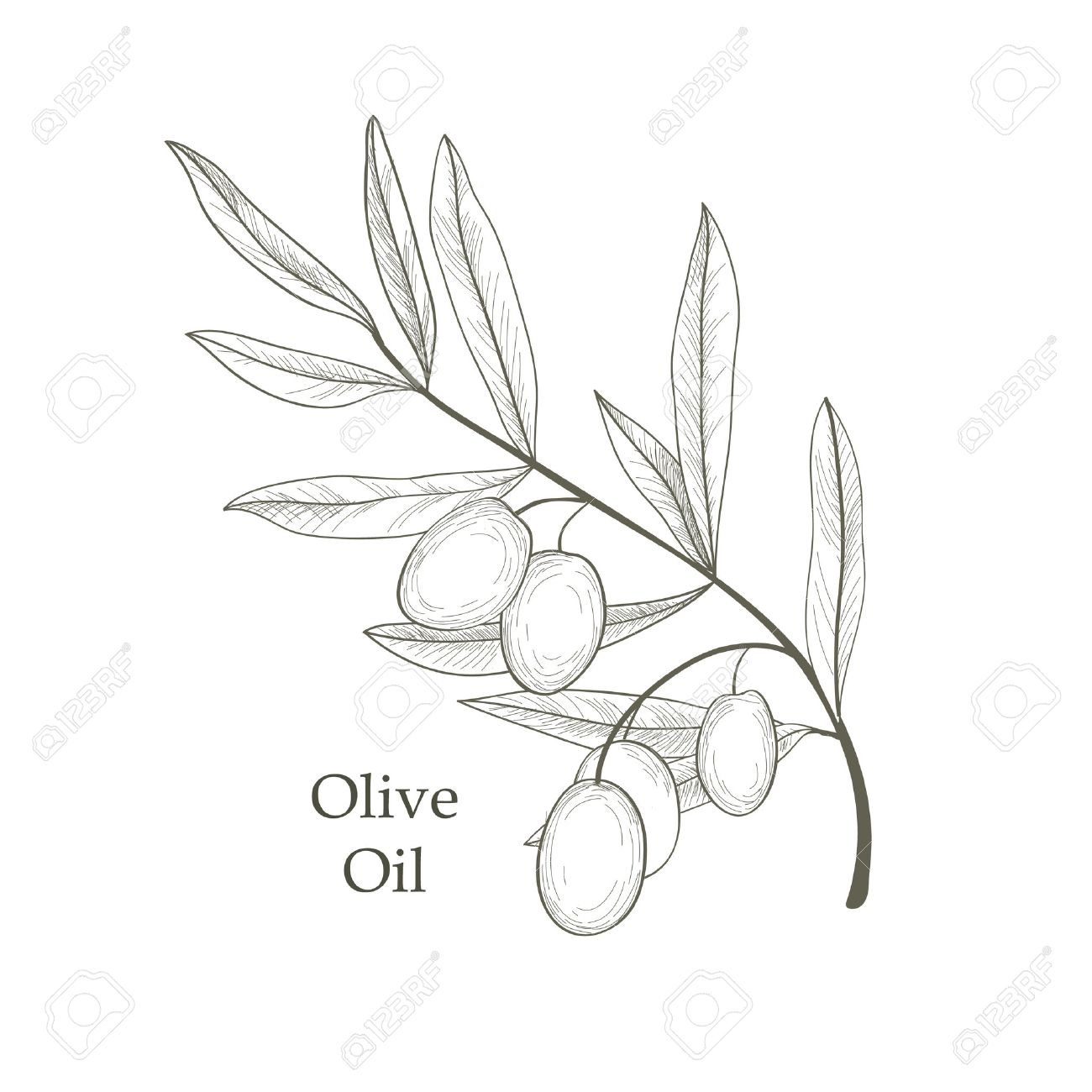 Olive Tree Branch With Olives Isolated Sketch Over White Background Retro Olive Branch Engraving Vector Illustration Royalty Free Cliparts Vetores E Ilustracoes Stock Image 48447964