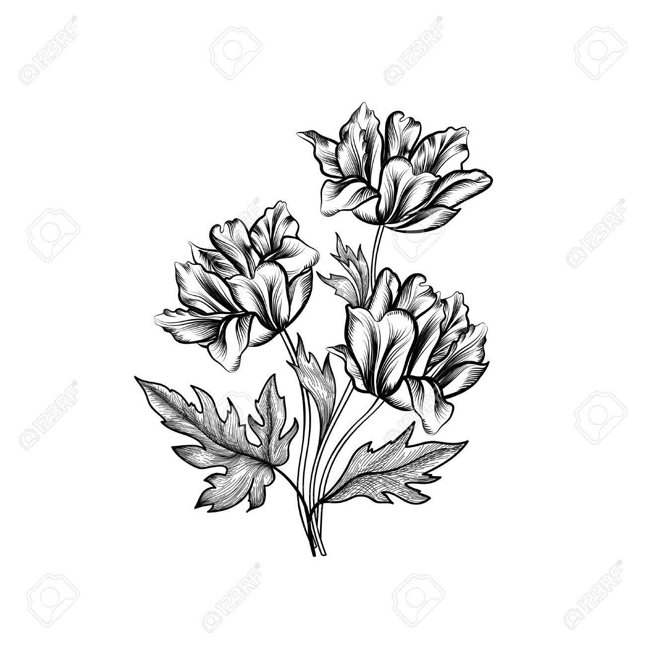 Blumenfeld Mit Sommerblumen Floral Bouquet Withflower Tulpe