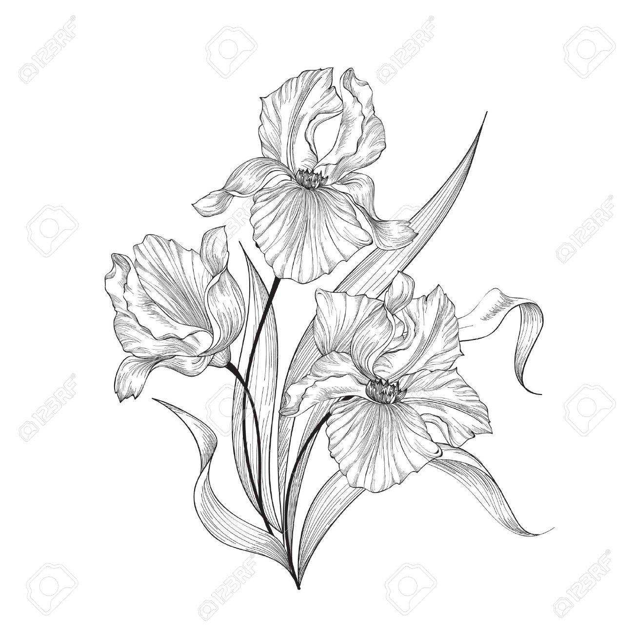 Floral bouquet with flower iris. Vintage Fourish Greeting Card Design. Swirl flower posy engraving border. Floral etching background - 61764239