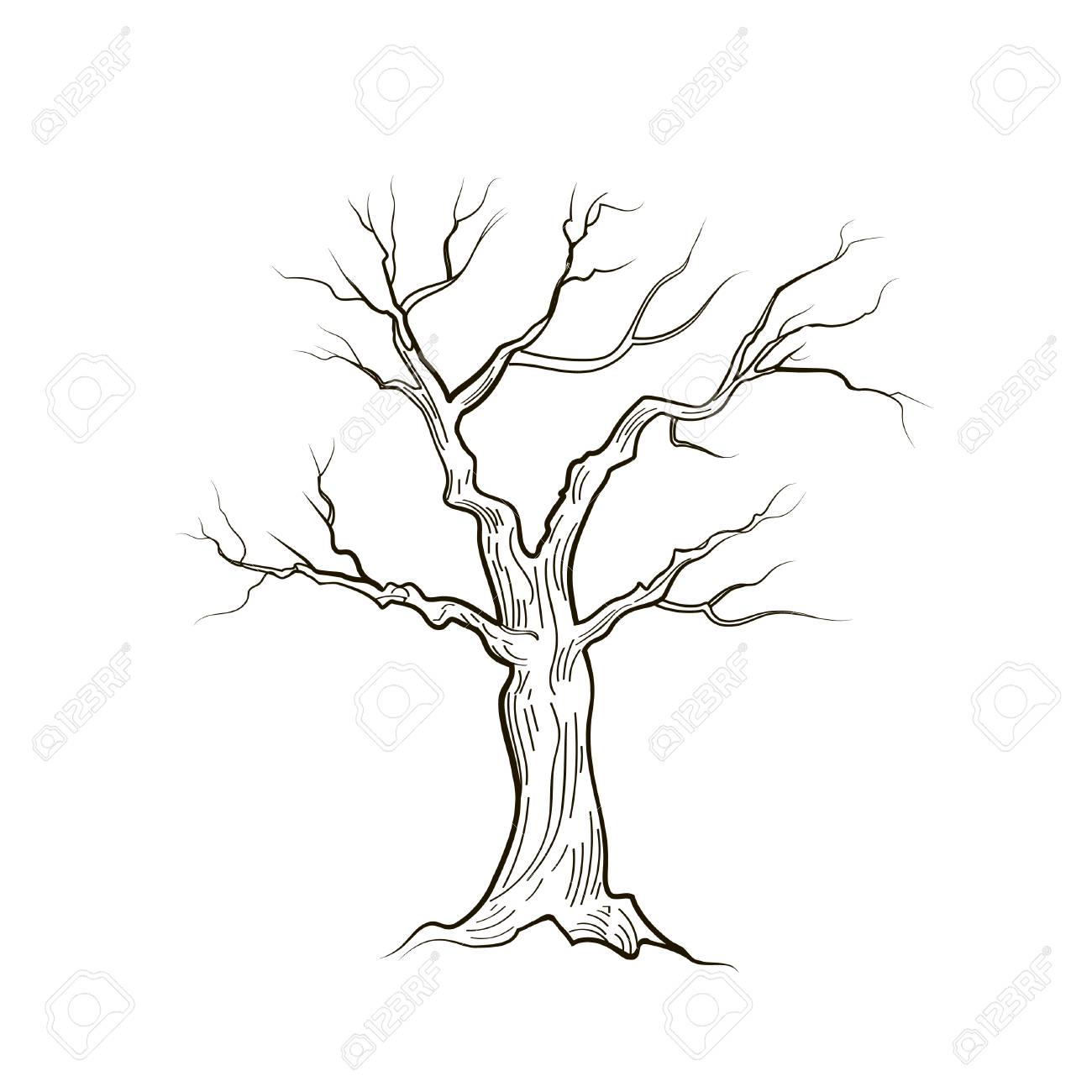 Tree Without Leaves Isolated Nature Sign Vector Sketch Royalty Free Cliparts Vectors And Stock Illustration Image 85319436 I made 7 drawings of various trees with step by step instructions. tree without leaves isolated nature sign vector sketch royalty free cliparts vectors and stock illustration image 85319436