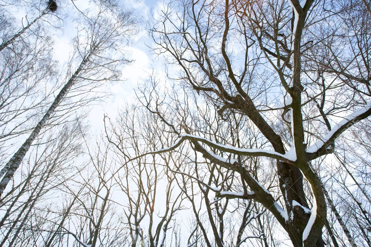 An image of trees on the background of sky Stock Photo - 12935514