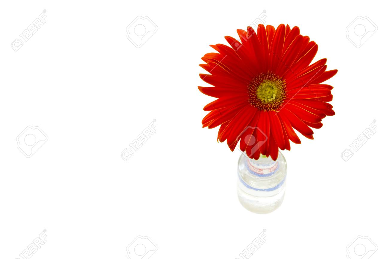 gerber flowers on a green stalk against white background Stock Photo - 17571536