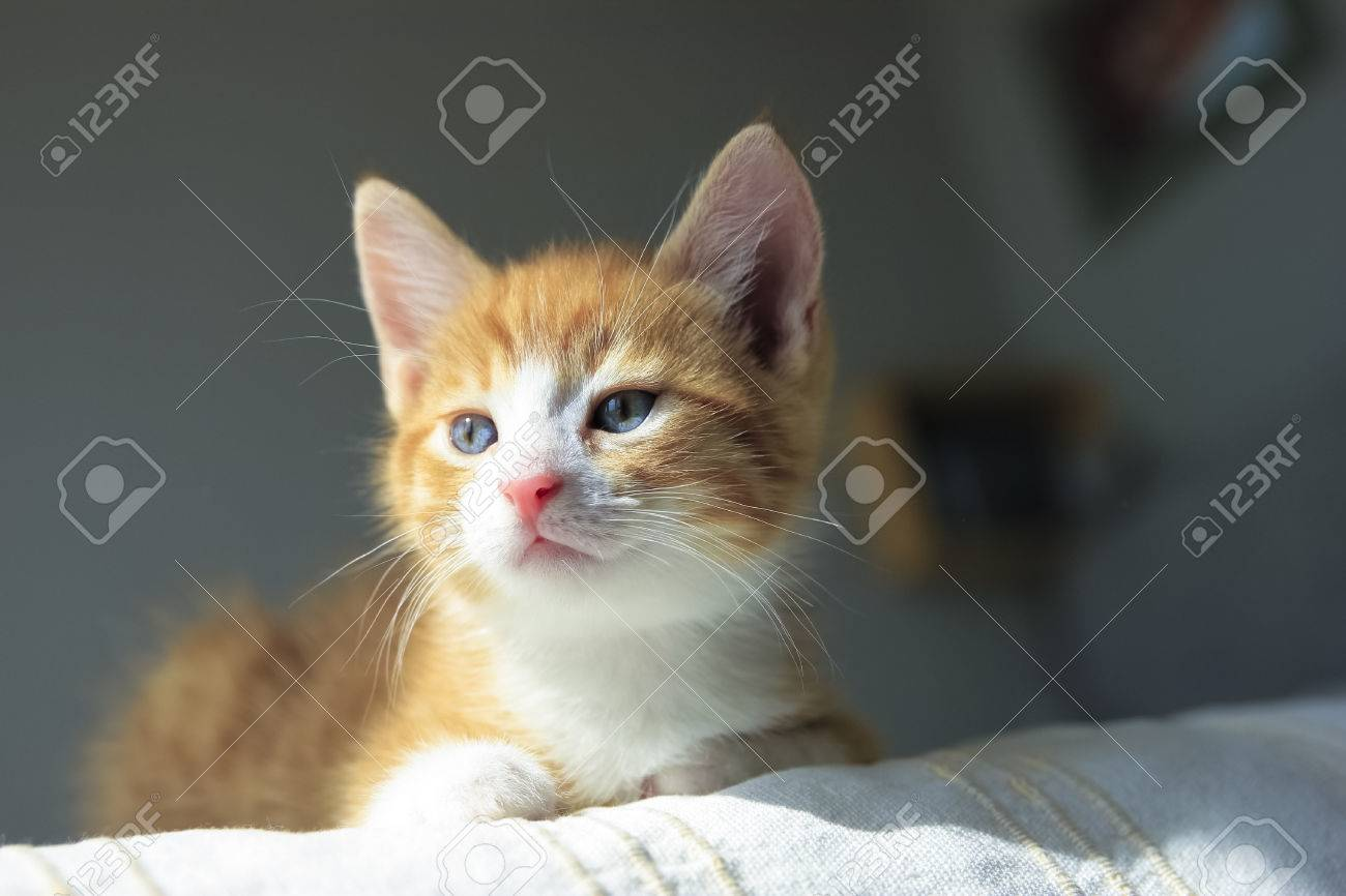 Cute Orange Kitten With Paws In Sunny Day Stock