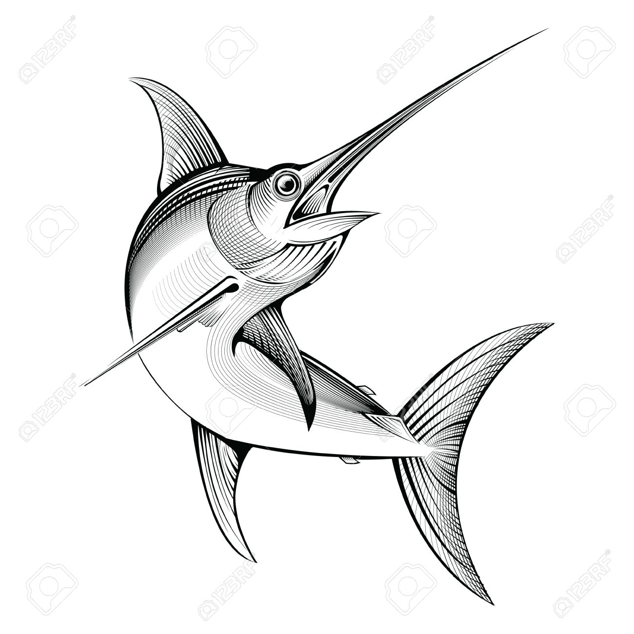Uncategorized Swordfish Drawing vector swordfish line engraving illustration royalty free stock 55445085