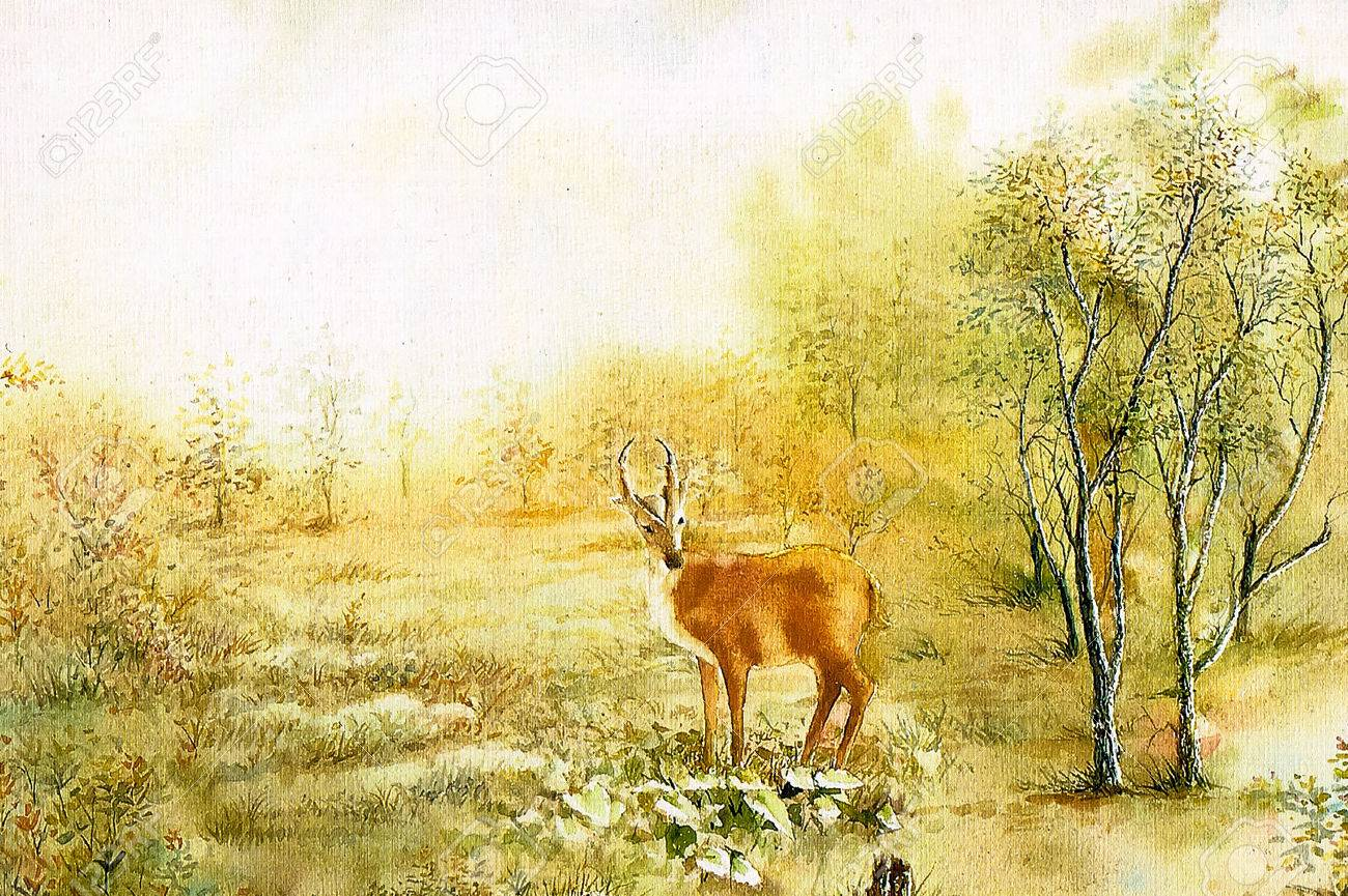 watercolor painting deer in the forest stock photo picture and royalty free image image 34242189 watercolor painting deer in the forest