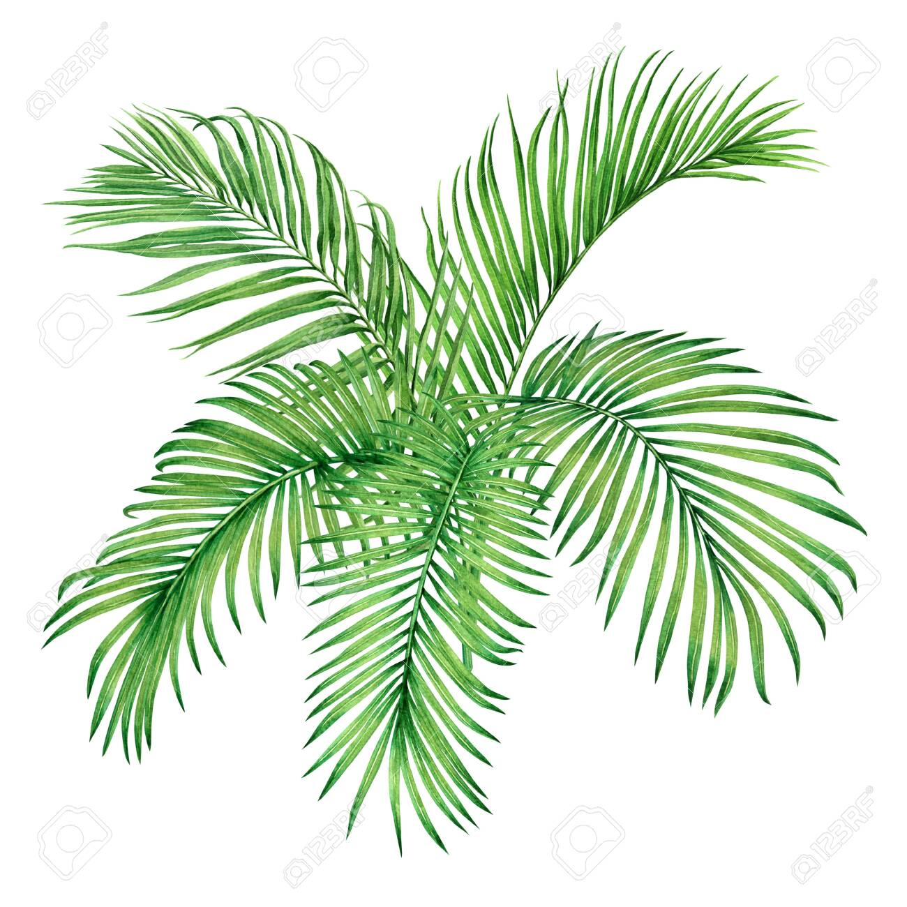 Watercolor painting tree coconut,palm leaf,green leave isolated on white background.Watercolor hand painted illustration tropical tree exotic leaf for wallpaper vintage Hawaii jungle style pattern. - 137886971