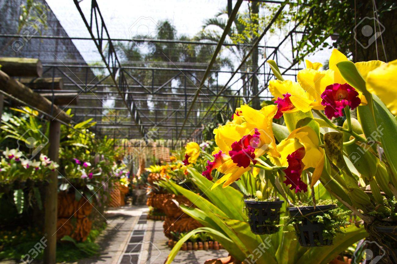 Orchids Garden , At Pattaya , Stock Photo   13769370