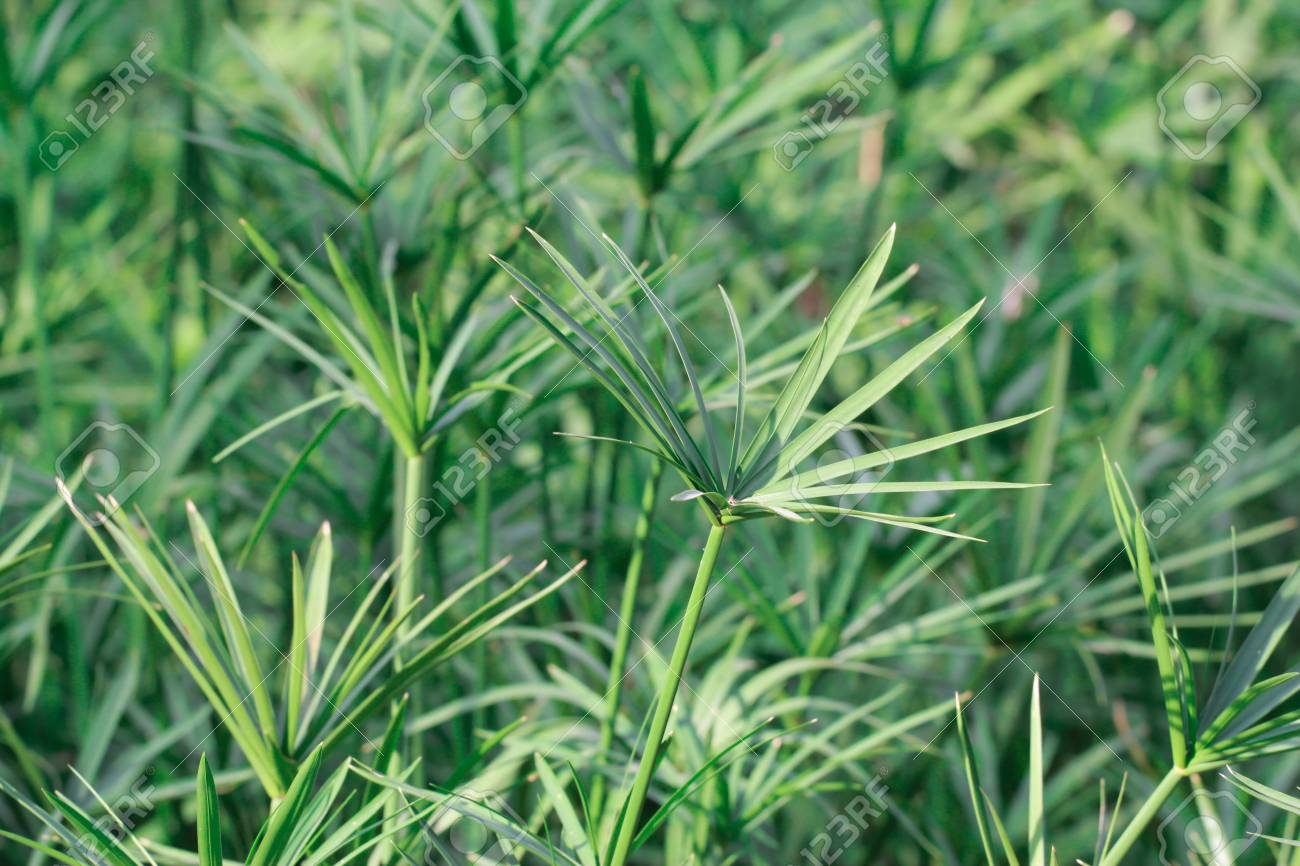 grass background with place for your text Stock Photo - 17233272