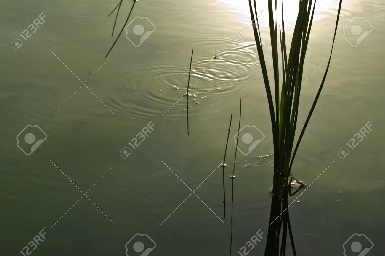 aquatic Plants Stock Photo - 19898417