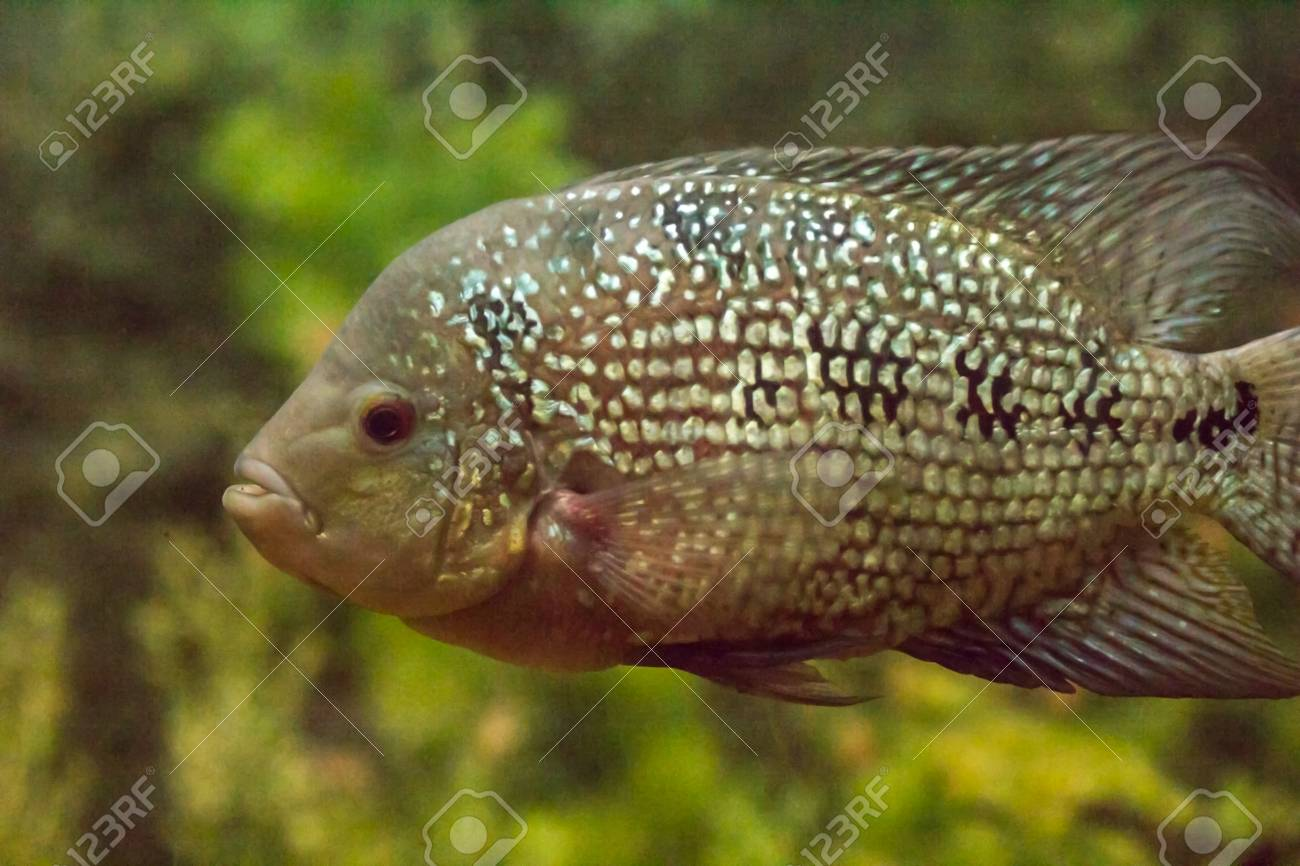 green beautiful planted tropical freshwater aquarium with fishes Stock Photo - 22613997