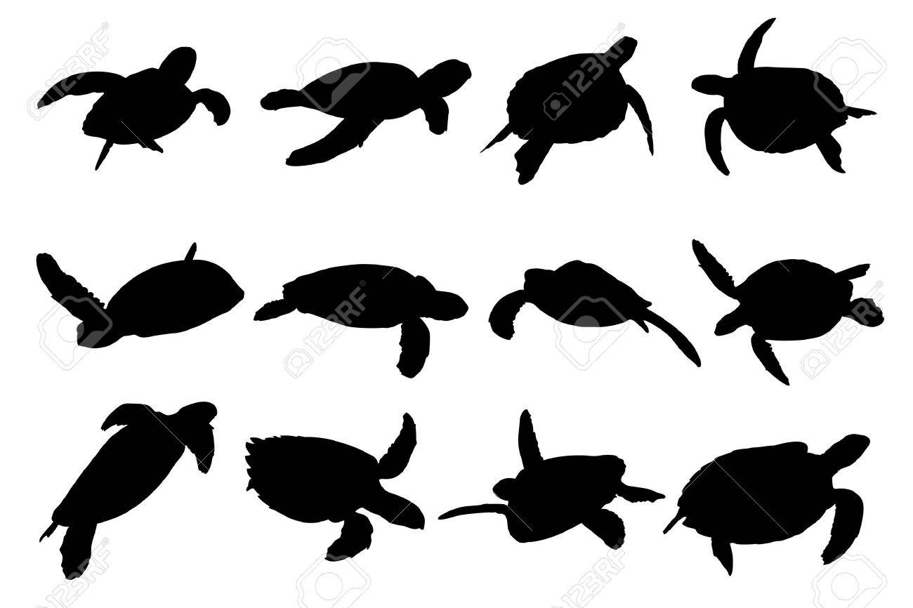Collection of turtle vector silhouettes - 7973383